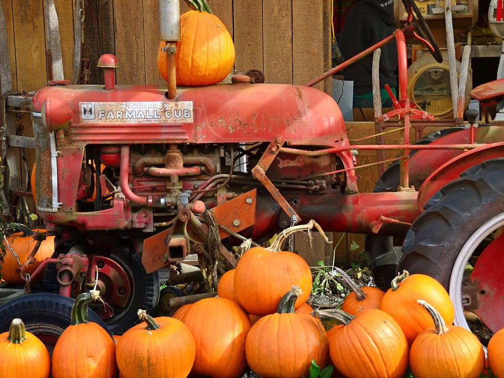 Roadside farm selling pumpkins