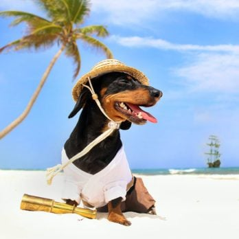 Crusoe the Celebrity Dachshund Travels the World