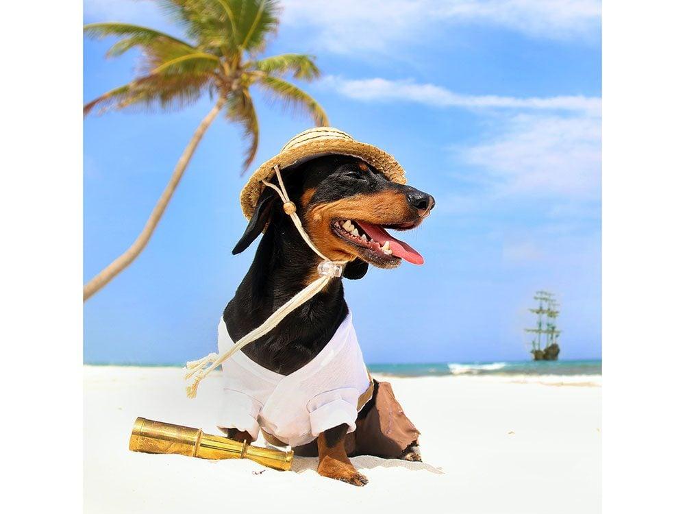 Robinson Crusoe the Celebrity Dachshund