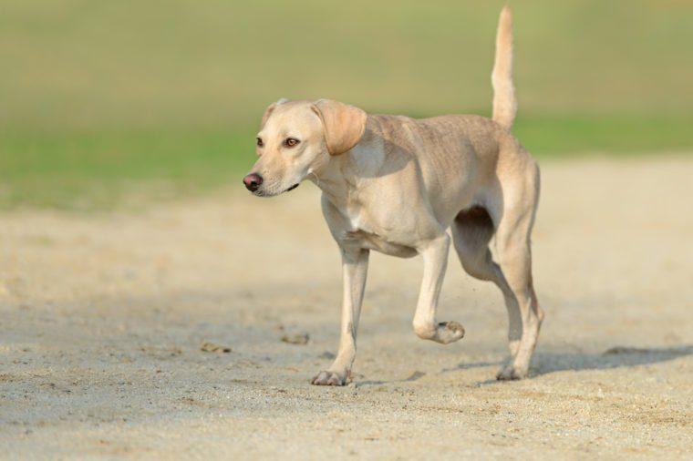 Beautiful young female dog