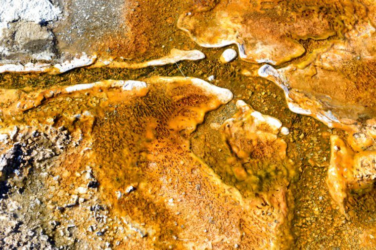 Colorful Bacteria mats of thermophilic microorganisms in the runoff of hot springs, Yellowstone National Park, Wyoming