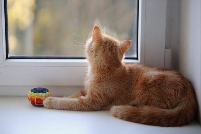 cat, window
