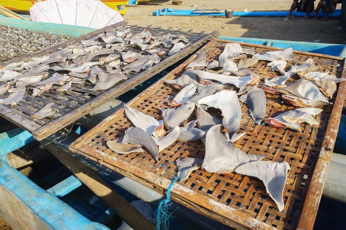 Shark fins dried under the hot sun at fisherman village in Asia.