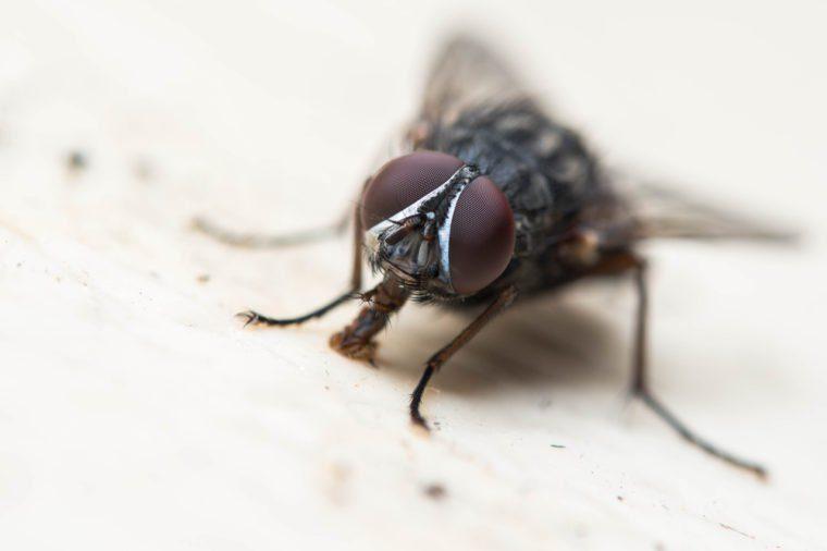 Common fly macro