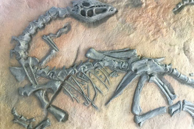 Replica dinosaur fossil on the wall