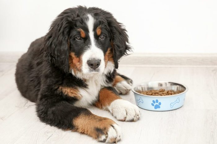 Cute funny dog lying on floor near bowl with food at home