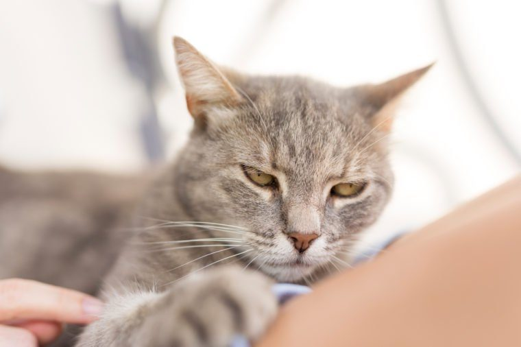 15 Signs You Cat Is Secretly Mad At You Reader S Digest
