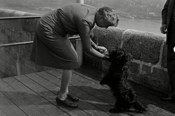 Fala, pet Scottie Terrier of President Roosevelt