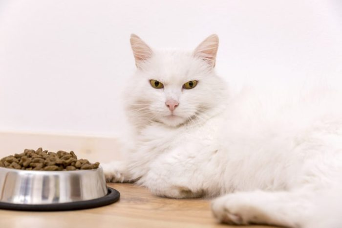 Beautiful tabby cat sitting next to a food bowl, placed on the floor, and eating