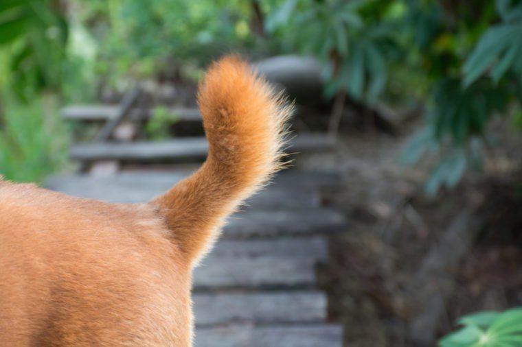 Dog tail,Dog's rear,dog,cute tail,dog fur texture