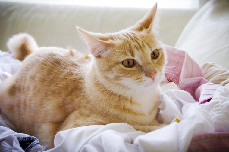 Small tabby cat