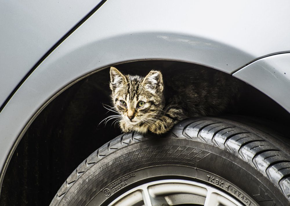 kitten on the wheel of a car