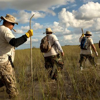 Meet the Hunters Fighting the Burmese Python Invasion in Florida