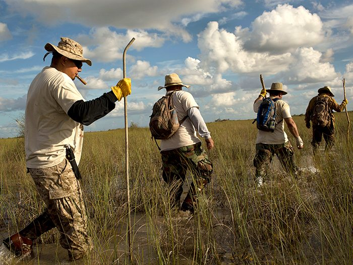Rahill (far right) leads a team of the Swamp Apes in a hunt for pythons