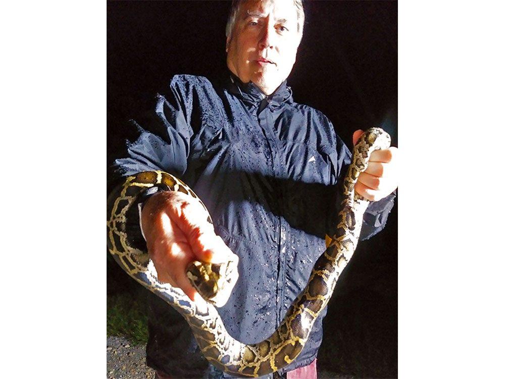 Holding a Burmese python