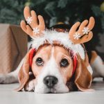 100+ Funny Jokes for the Holidays