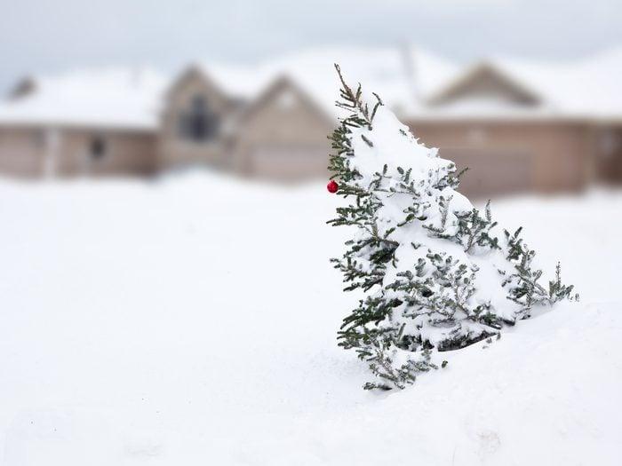 Christmas tree left outside