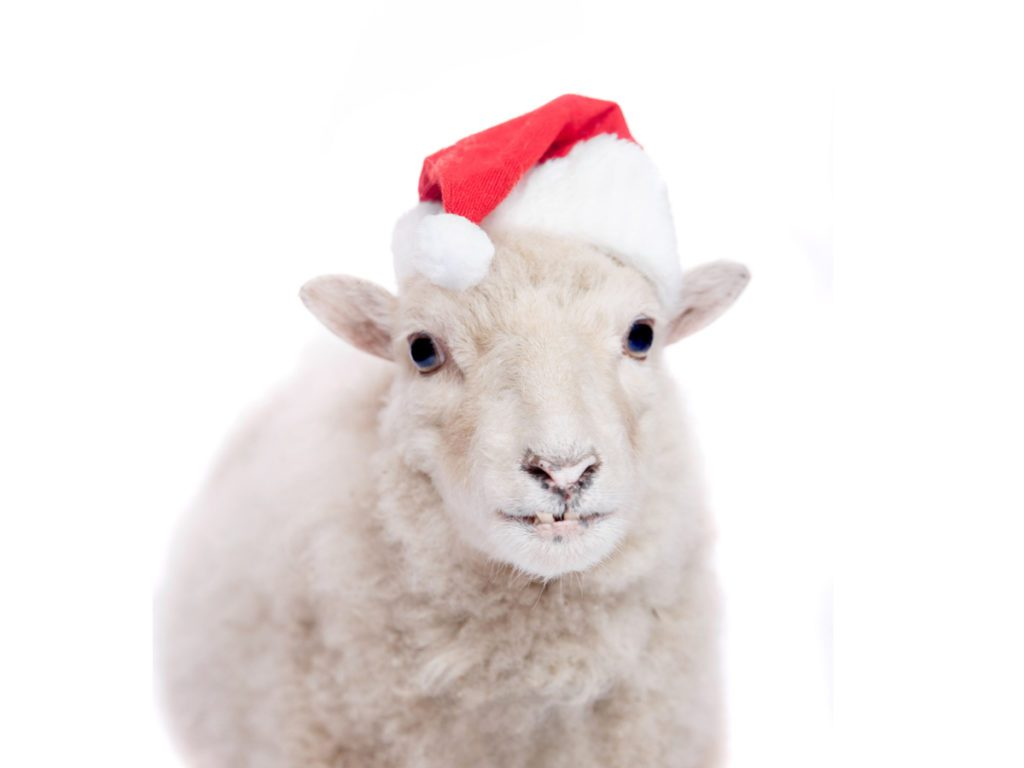 Sheep in santa hat