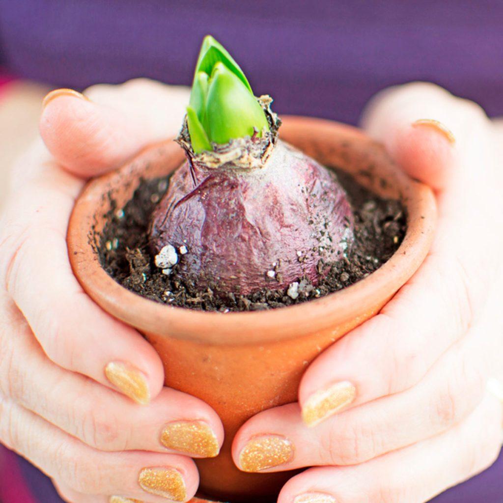 Planting a bulb