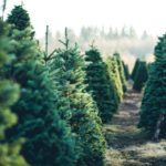 This is the Best Time to Buy a Christmas Tree in Canada