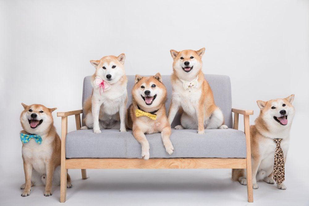 The Taobaobao family