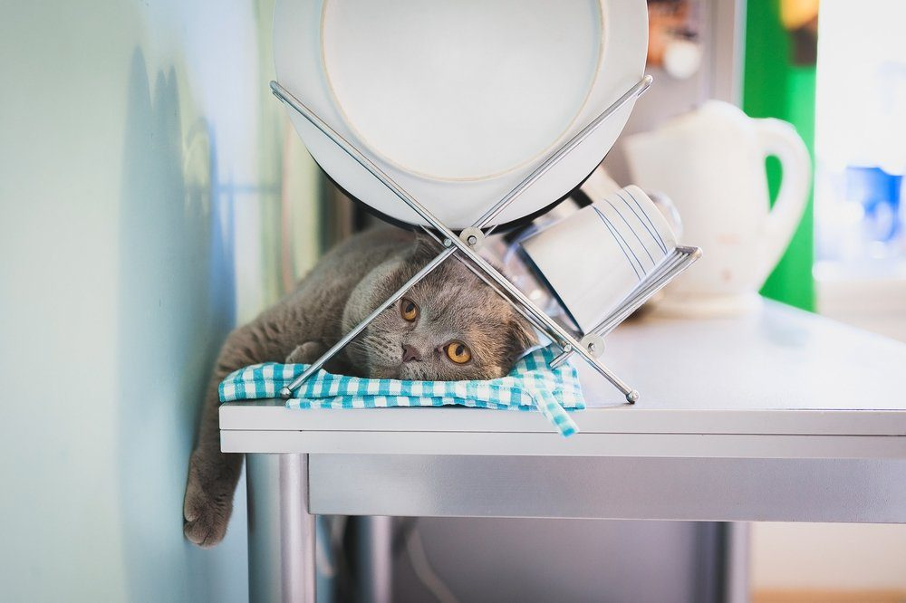 Lazy cat lying under the dish drainer in the kitchen