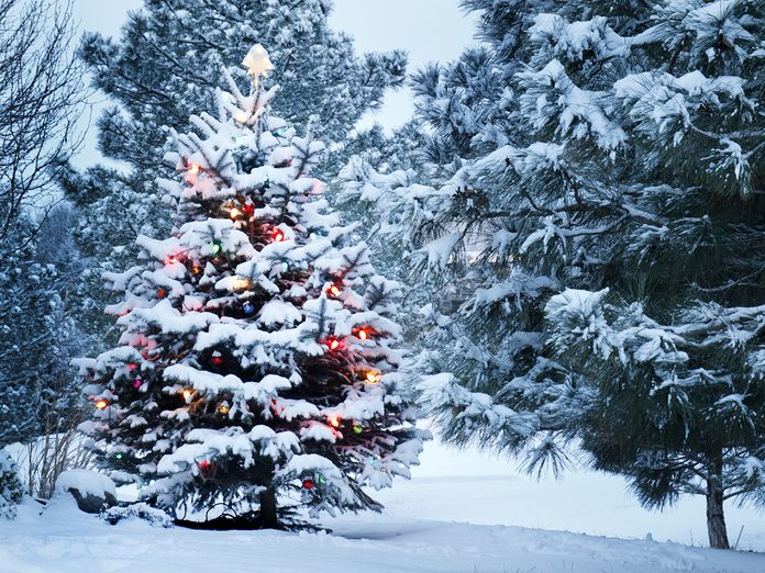 Uses for Christmas trees after the holidays - Snow-covered tree