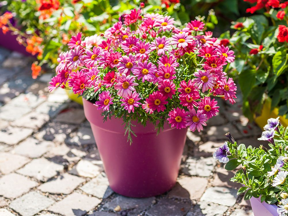 Uses for sandpaper - deter slugs from potted plants
