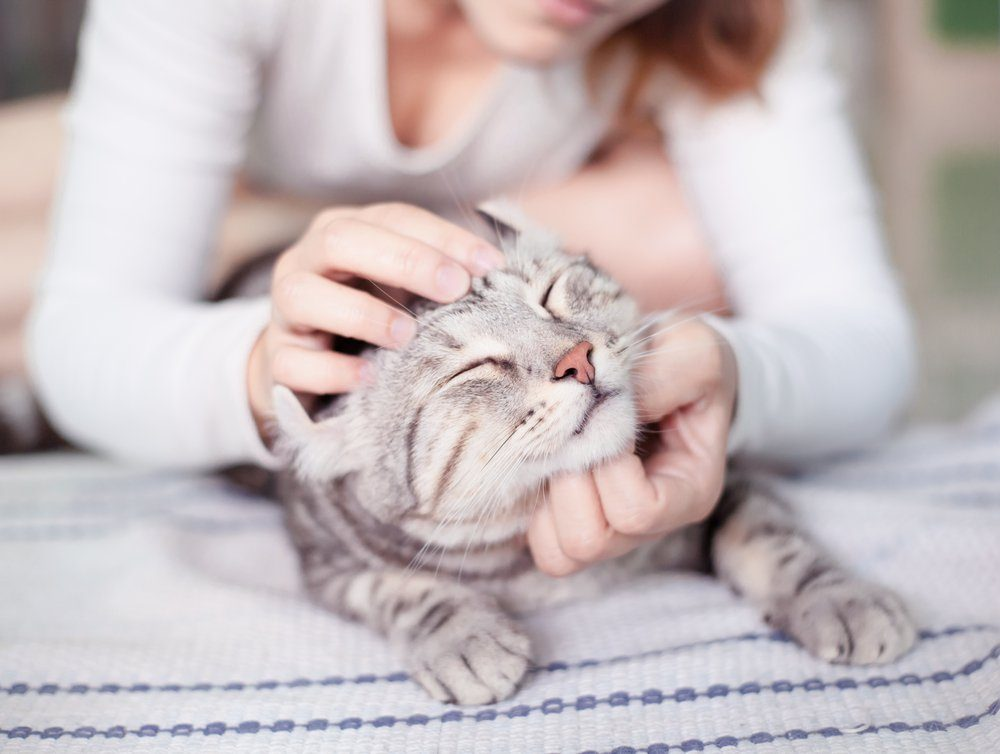 happy cat lovely comfortable sleeping by the woman stroking hand grip at . love to animals concept .