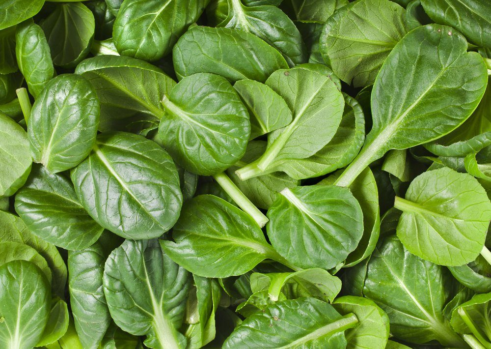 fresh green leaves spinach or pak choi