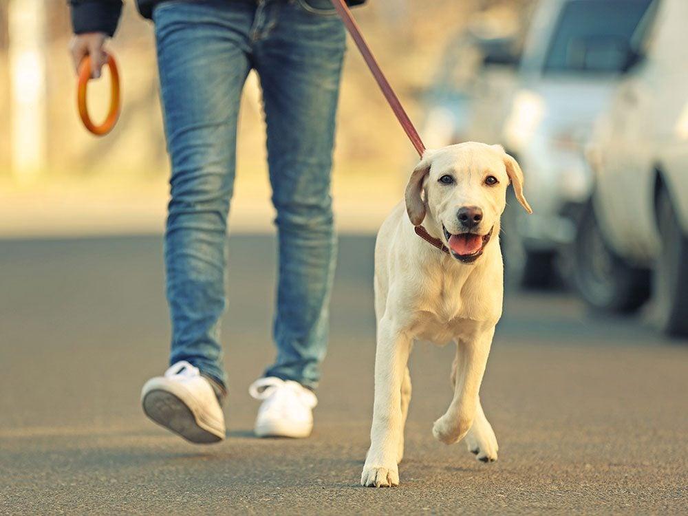 Bathroom breaks for dogs on a road trip