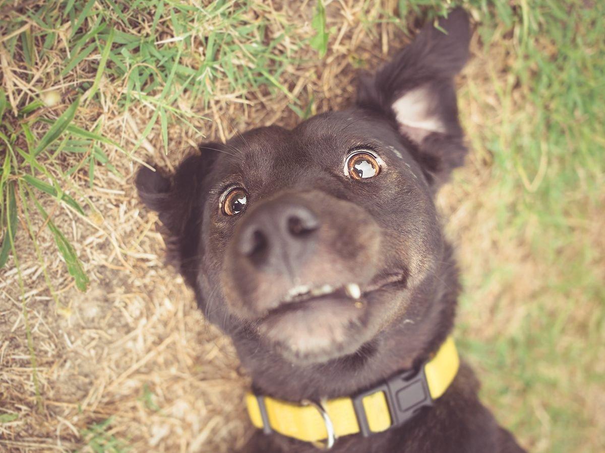Best Reader's Digest Jokes of all time - surprised dog