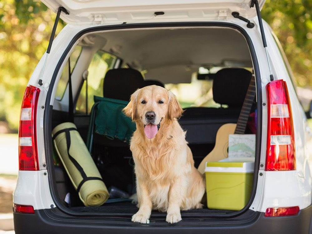 What You Need to Know Before Bringing Your Dog on a Road Trip