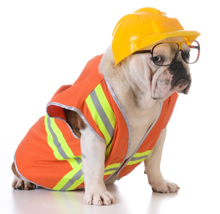 Dogs dressed for work