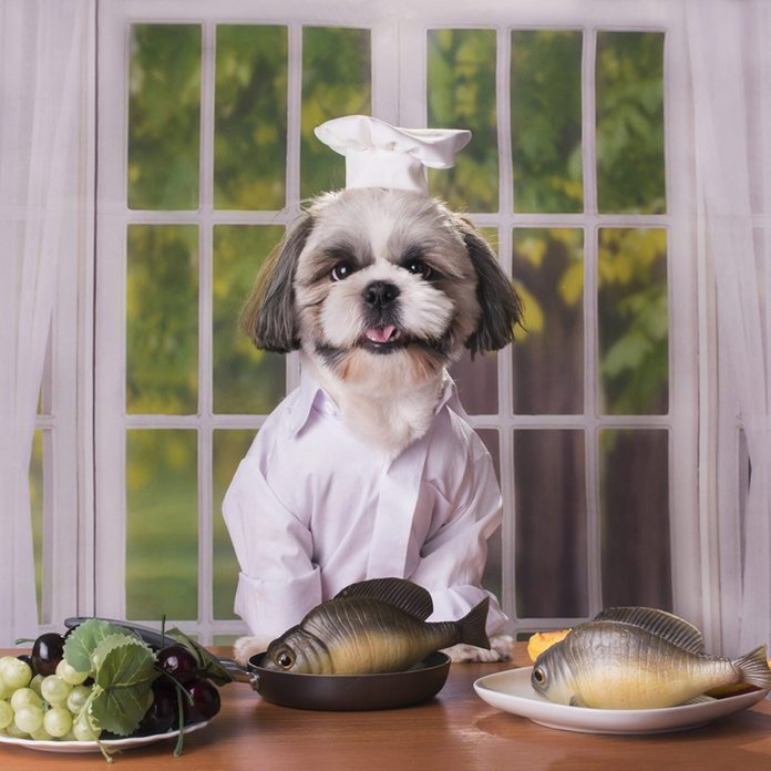 Dog in chef's costume