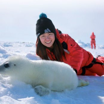 This Is What It's Like Photographing Baby Seals in the Magdalen Islands