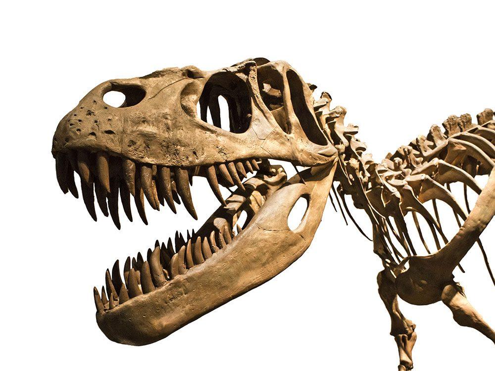 Living in Canada - dinosaur fossils