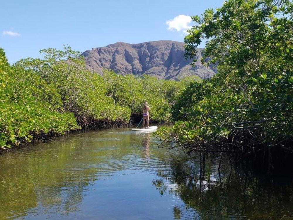 Mangrove forest in La Paz, Baja California Sur, Mexico