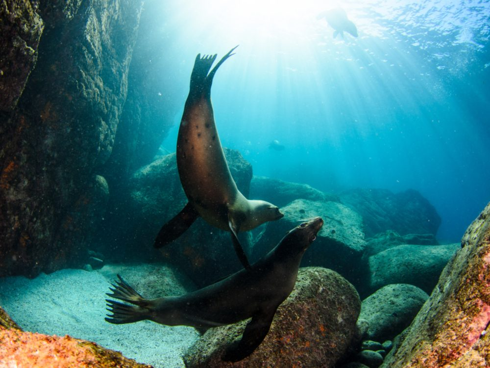 Sea lions in La Paz, Baja California Sur, Mexico