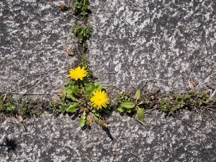 Weeds growing in driveway