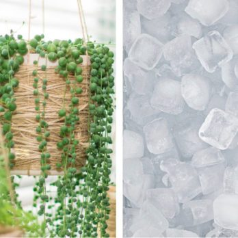 14 Clever Uses for Ice Cubes You'll Wish You Knew Sooner