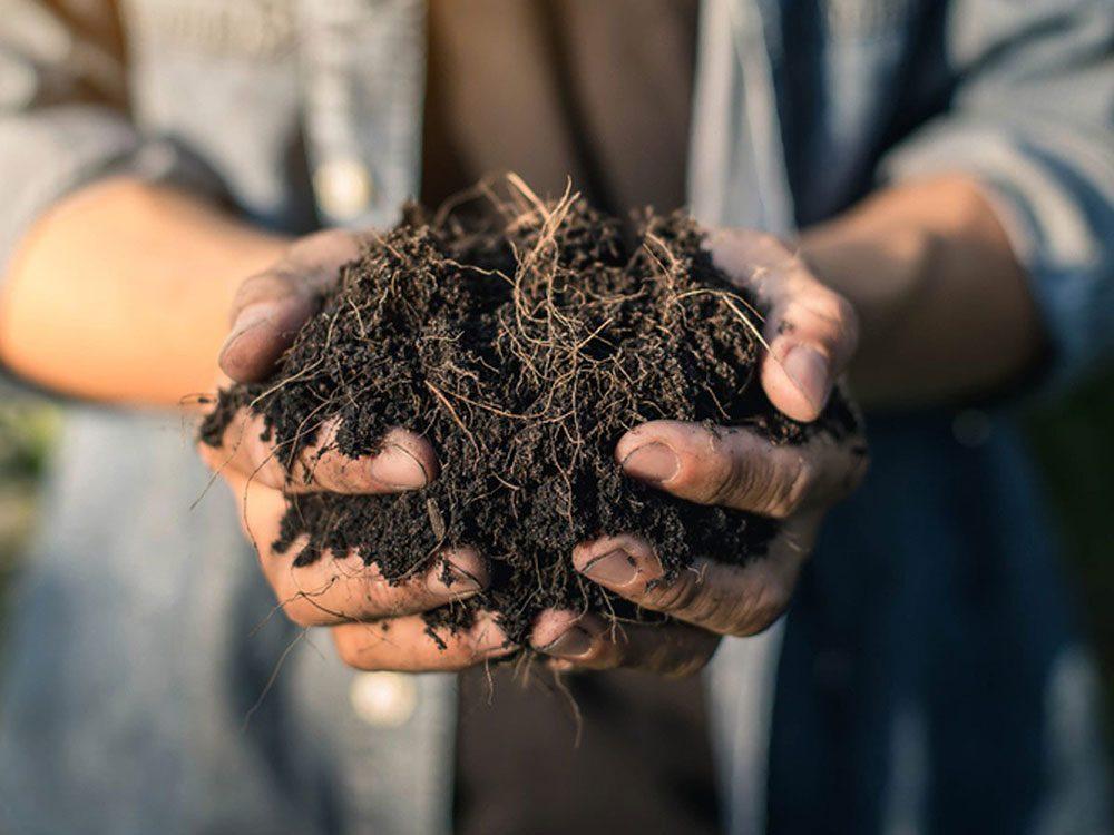 Urban gardening - compost tea