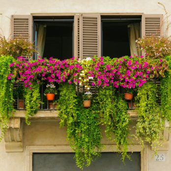 17 Urban Gardening Tips That Are Perfect For Small Spaces