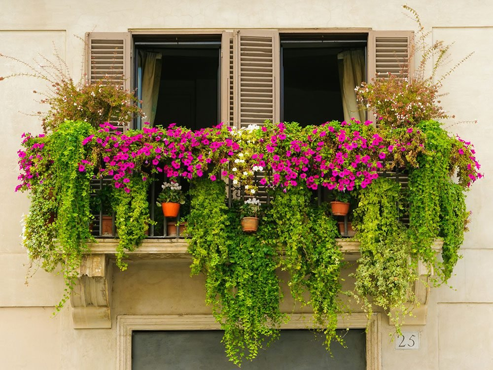 17 Great Urban Gardening Tips For Apartment Balconies Small Spaces