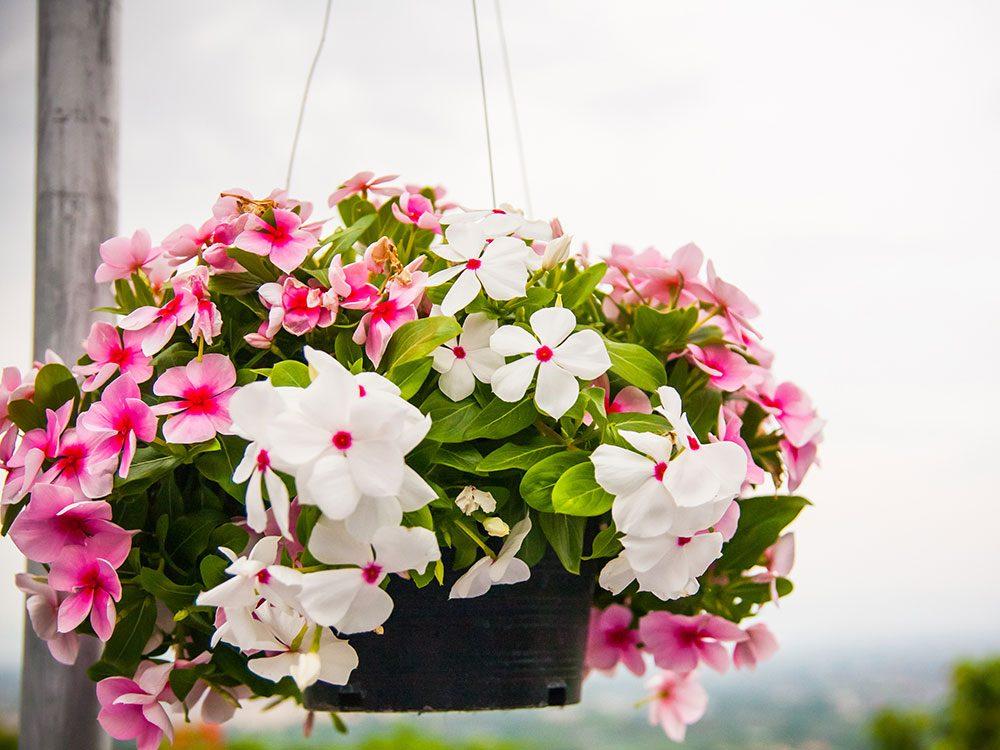 Urban gardening - hanging baskets