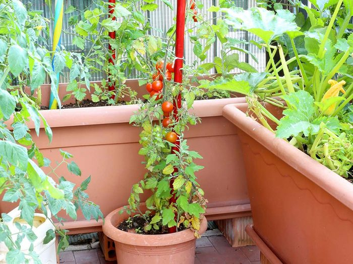 Urban gardening - hide balcony railing with plants