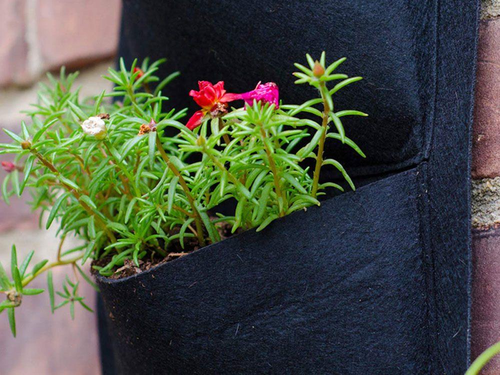 Urban gardening - vertical gardening