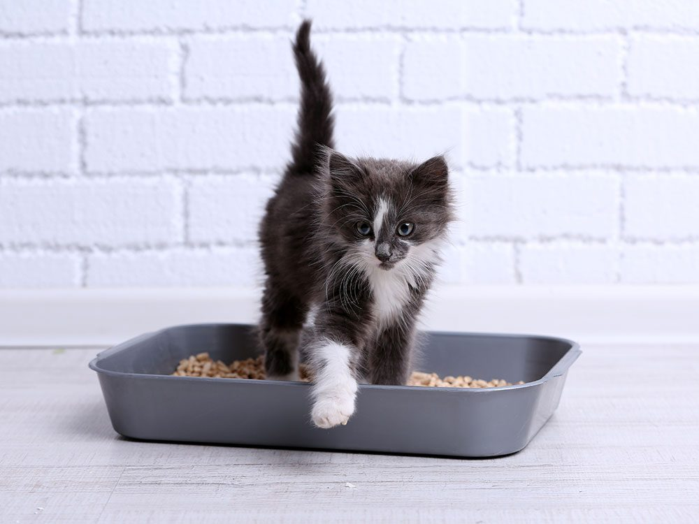 Uses for bleach - clean litter box