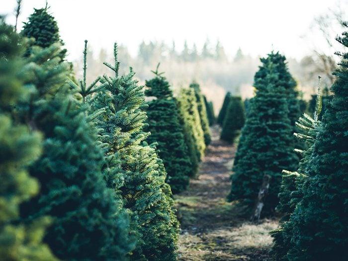 Uses for bleach - keep Christmas trees fresh