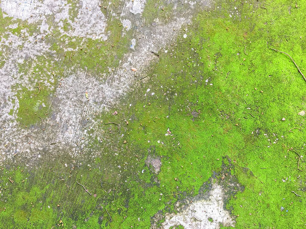 Uses for bleach - remove moss from sidewalk